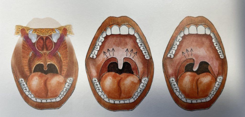 three mouths anatomy